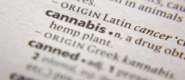 Cannabis-Begriffe: alle geläufigen Fachausdrücke