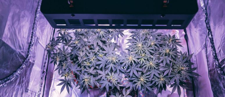 Wie man ein preisgünstiges Growzelt für Cannabis selbst baut