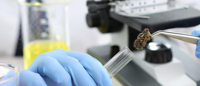 Welche Cannabissorten haben den höchsten CBD-Gehalt?