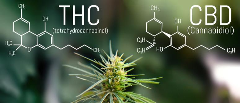 Was ist das beste CBD:THC-Verhältnis in Cannabis?