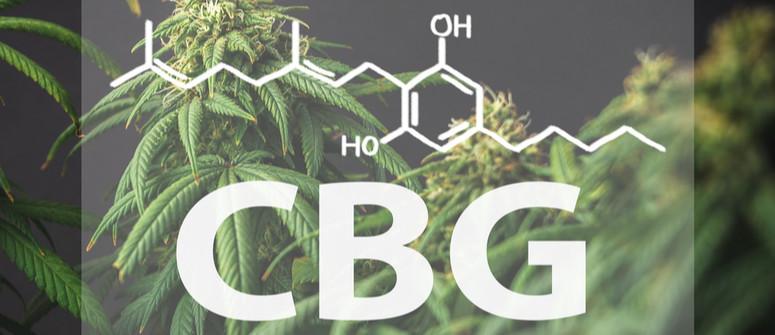Was ist CBG und was ist der Unterschied zu CBD?