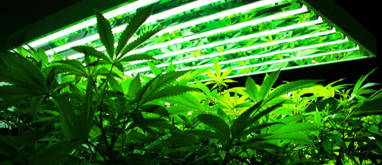 Was sind die besten Anbaulampen für Cannabis?