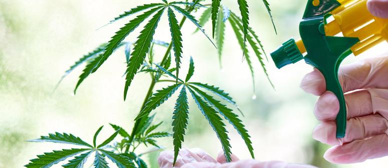 Wie und warum sollte man bei Cannabispflanzen Blattdüngung durchführen?