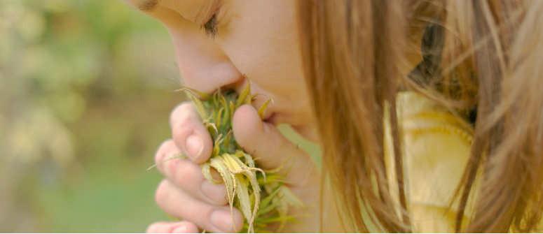 Die Top 10 geruchsarmen Cannabissorten