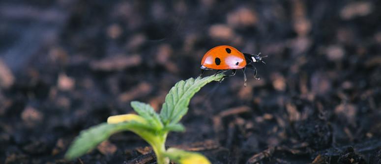 Die besten Insekten für Deine Cannabis-Pflanzung