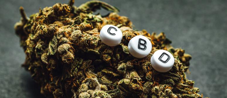 Wie man CBD-reiche Cannabissorten anbaut